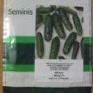 Семена самоопыляемого огурца Меренга F1